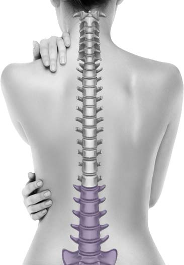 Lower Back | Lumbar & Sacrum Conditions