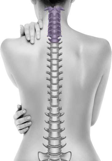 Neck | Cervical Conditions